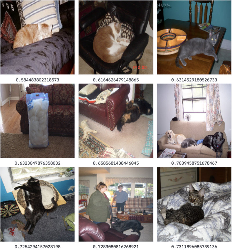Results for search query 'cat'+'sofa'